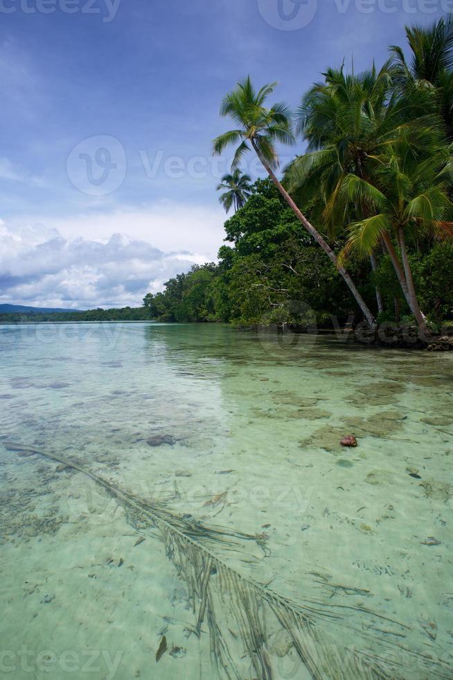 Lagune d'eau salée à uepi dans les îles salomon photo