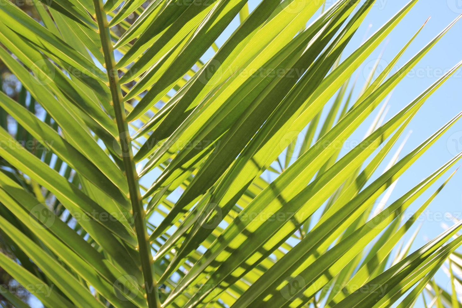 blatt der palme photo