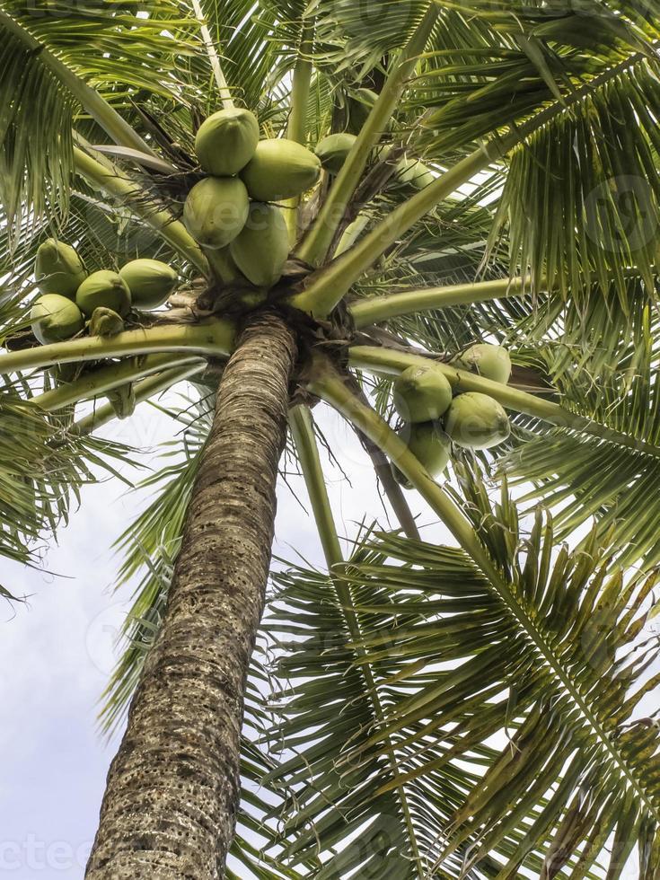 les tropiques en un coup d'œil photo