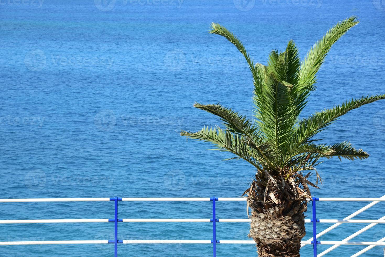 la mer et un palmier - station photo