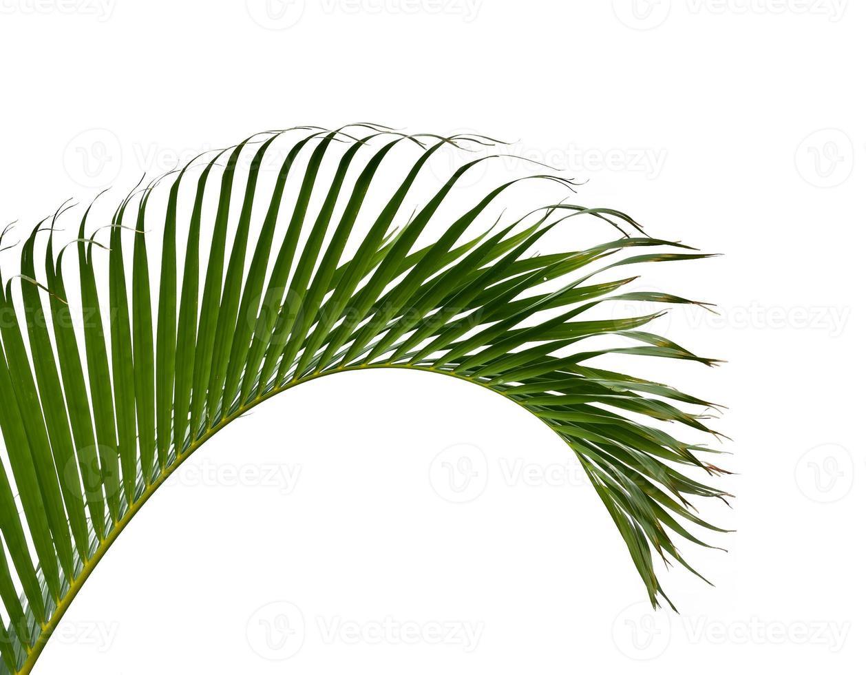 feuilles de palmier vert isolés sur fond blanc photo