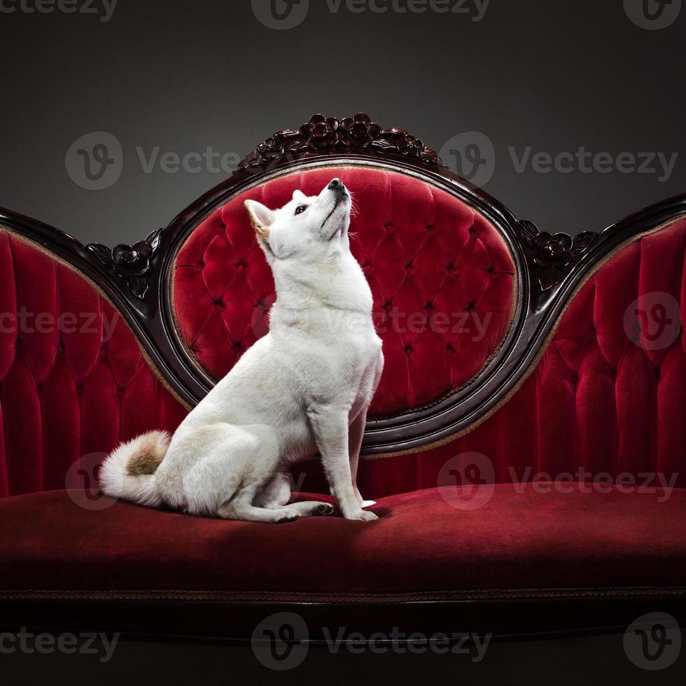 chien assis sur un canapé photo