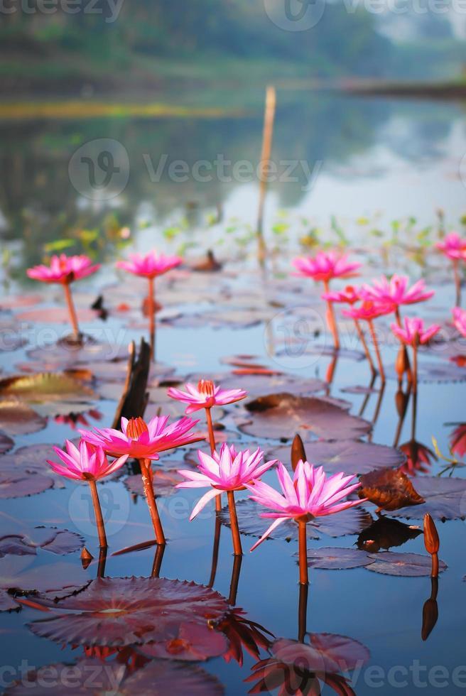 lotus 4 photo