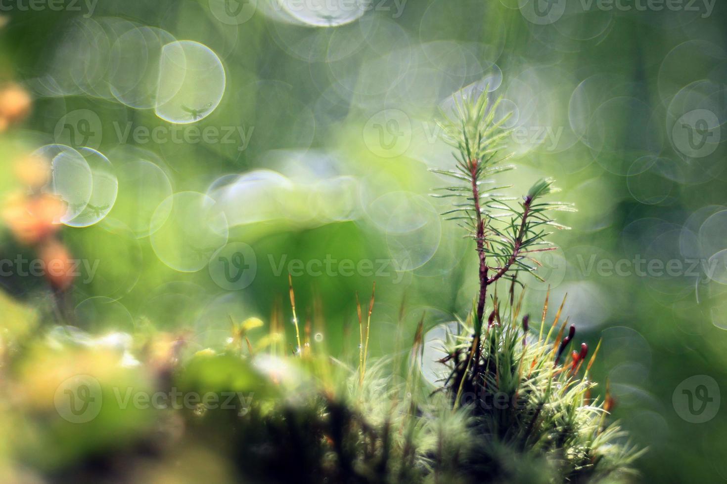 gouttes de rosée sur les brins d'herbe photo