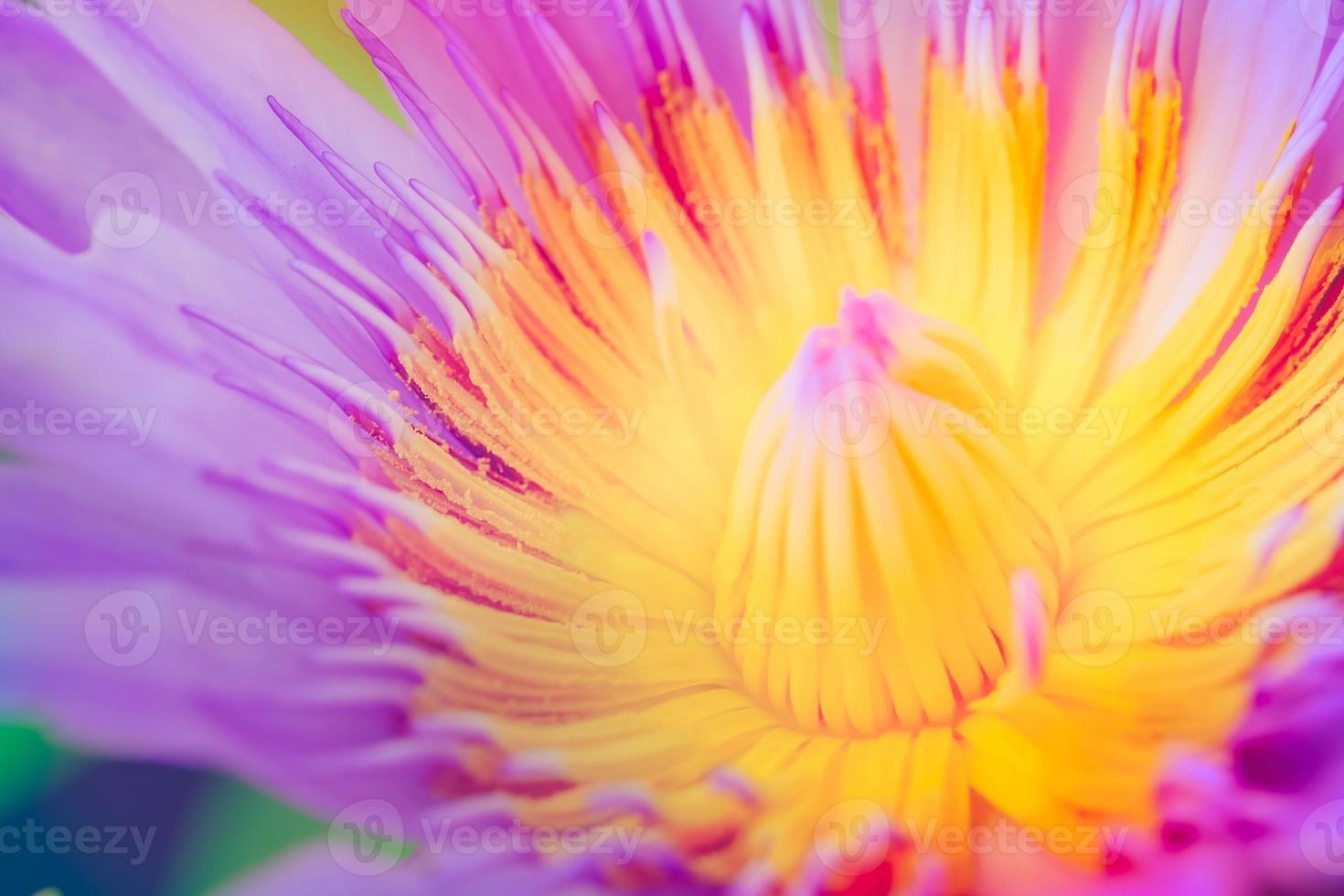 image d'une fleur de lotus sur l'eau photo