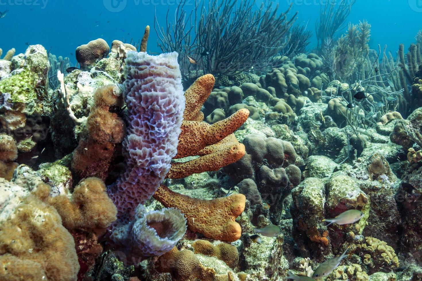 récif de corail sous-marin photo