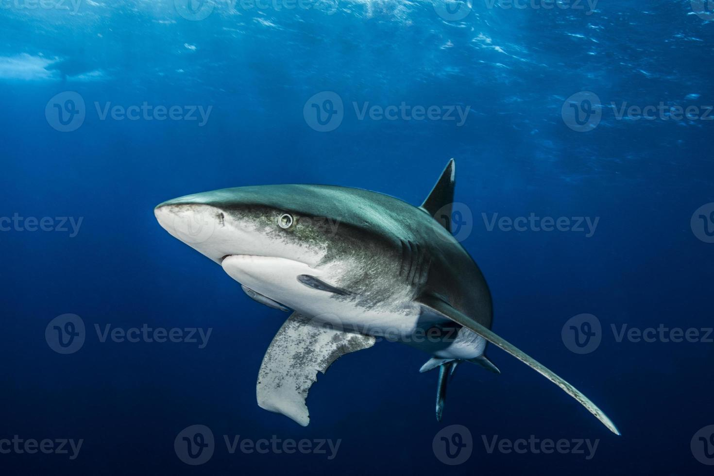 oeil de requin photo