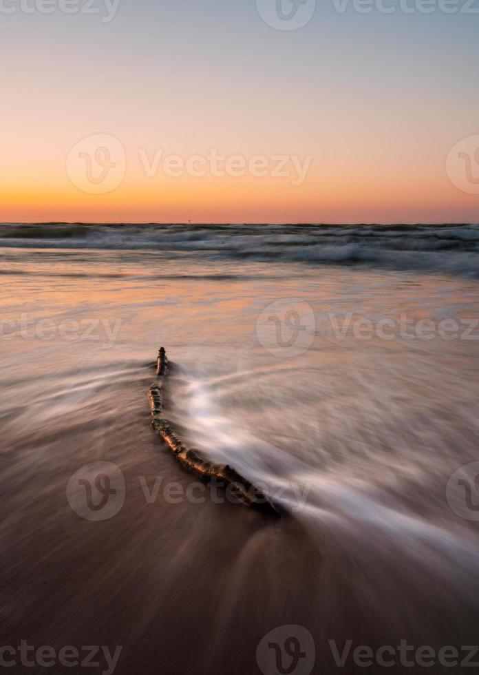paysage marin baltique avec bois flotté photo