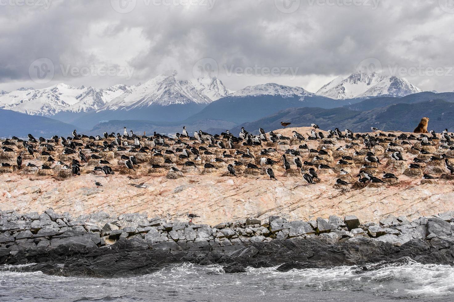 Animaux sur le canal Beagle, Terre de Feu photo