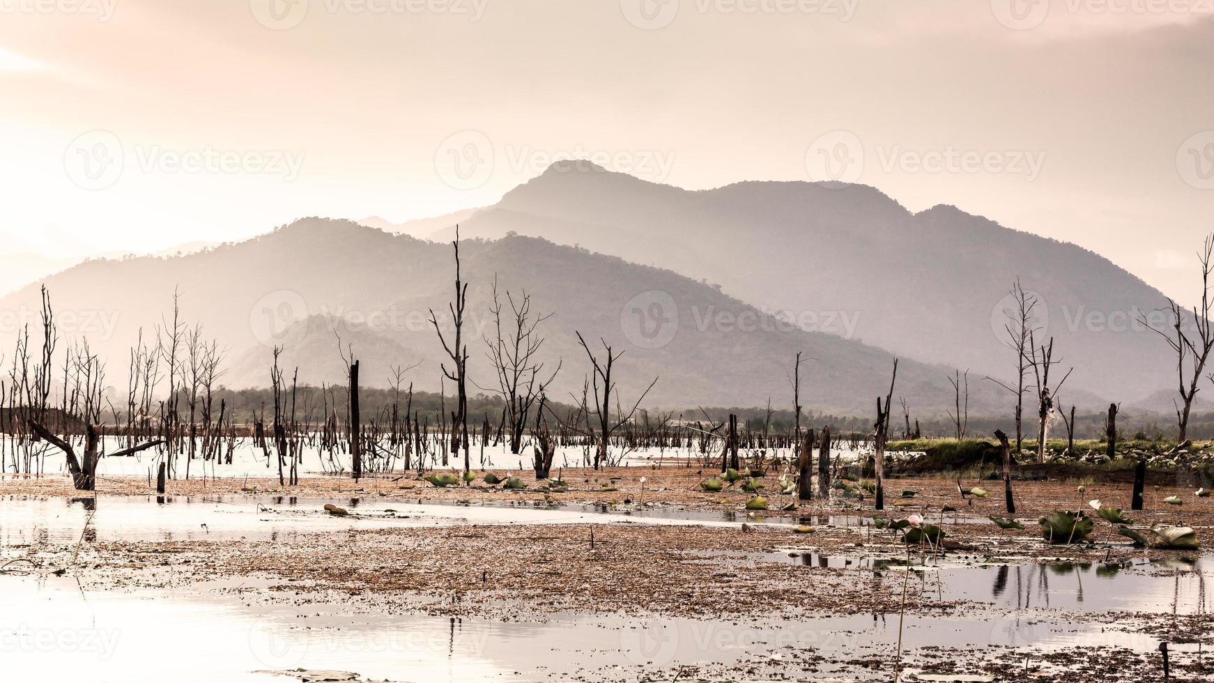 arbre sec avec lac et montagne au coucher du soleil photo