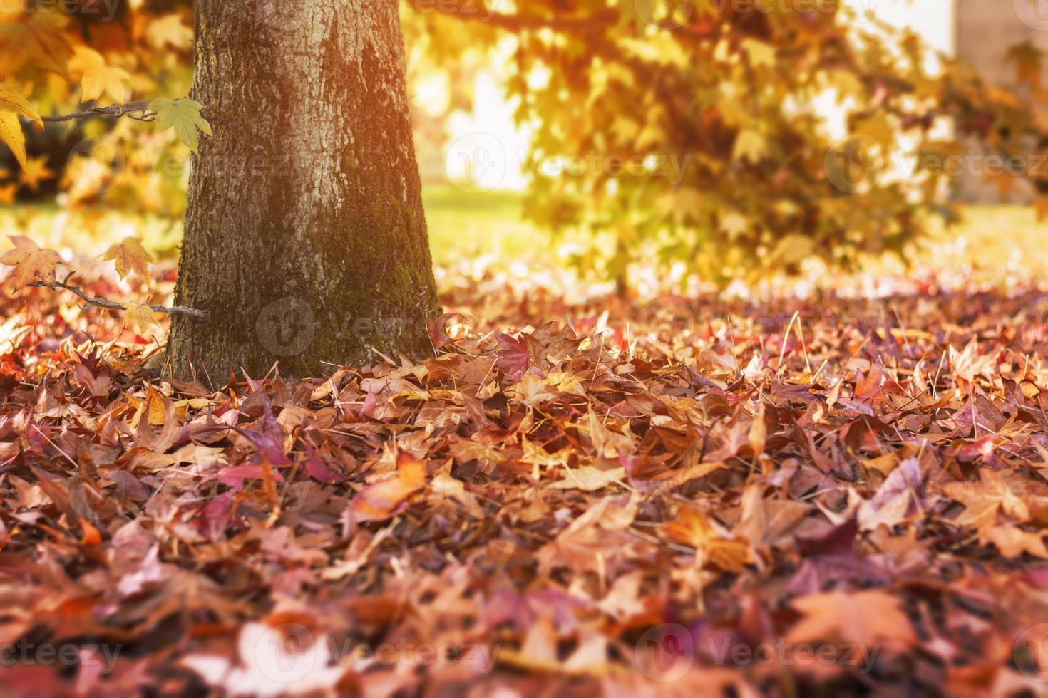 l'automne photo