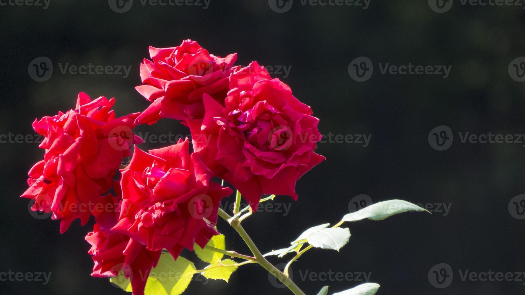 fleurs d'automne photo