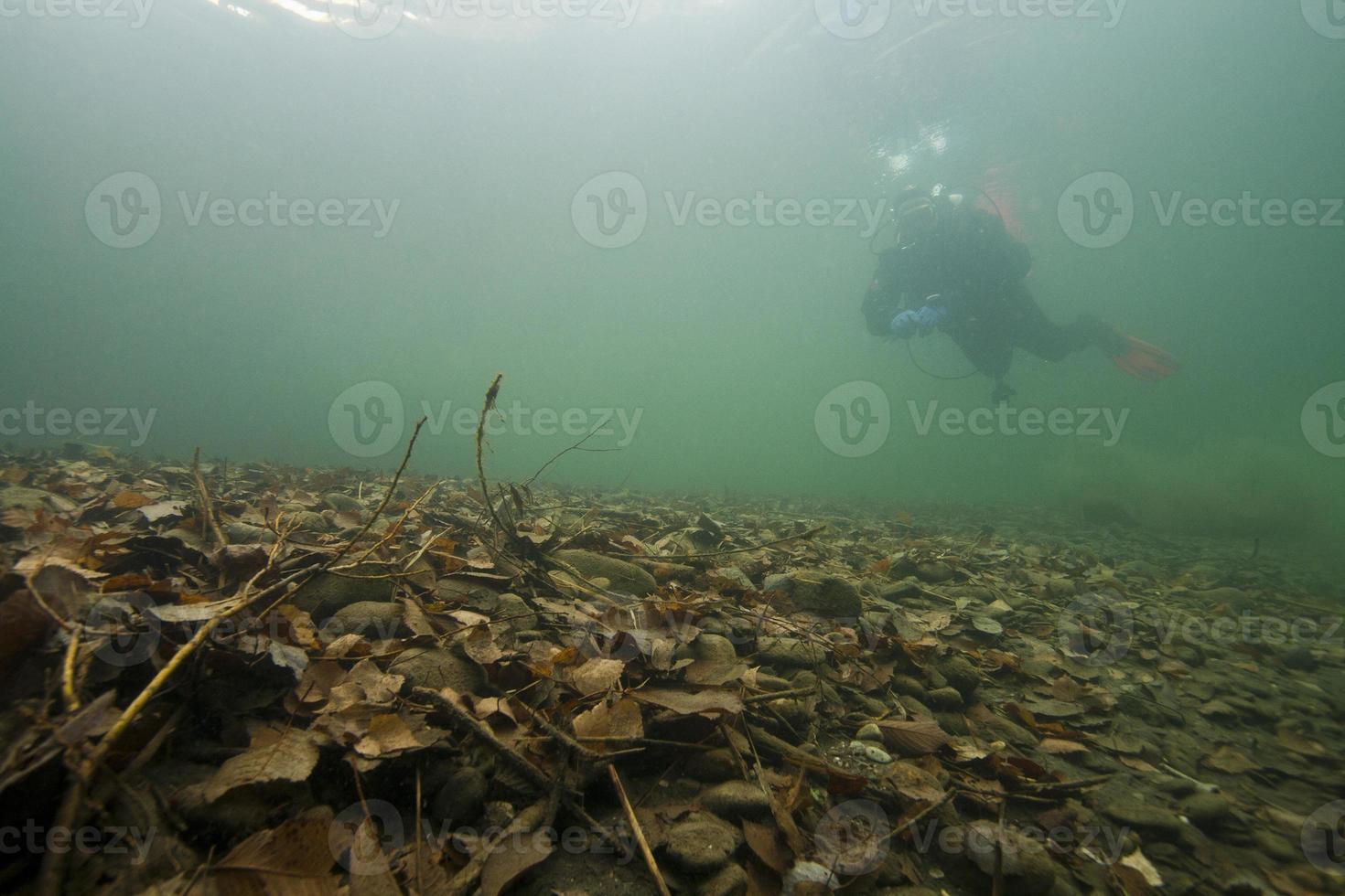 automne sous-marin photo