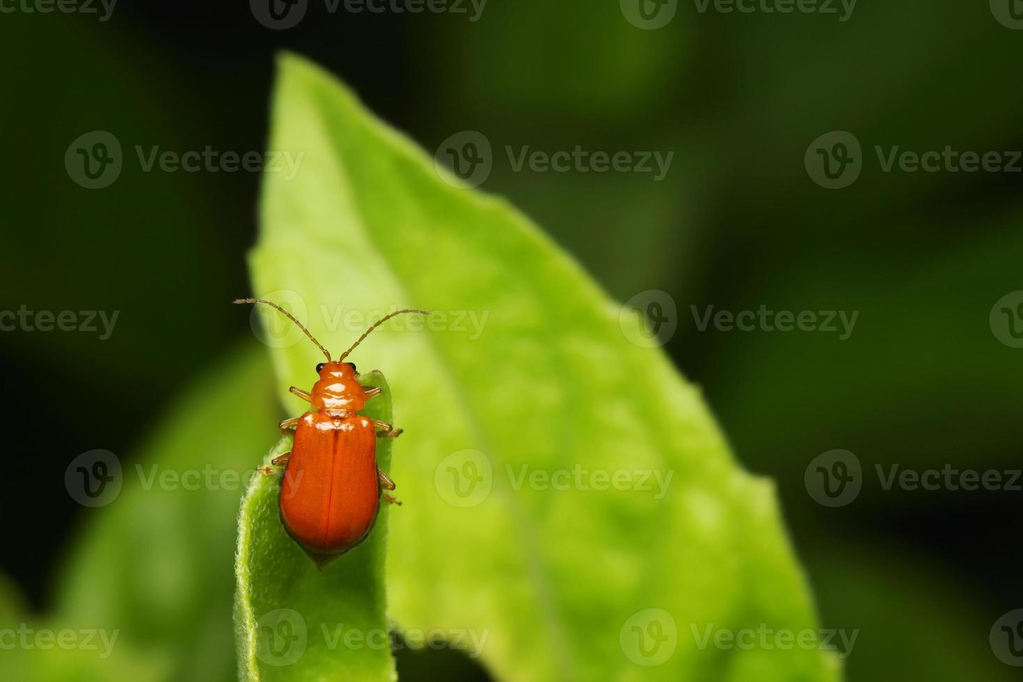 insecte orange sur la feuille verte photo