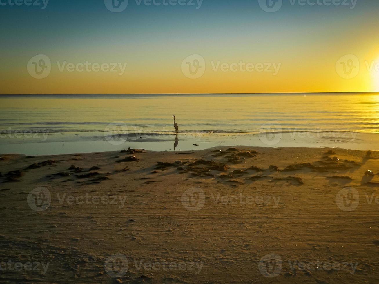 aigrette solitaire au coucher du soleil photo