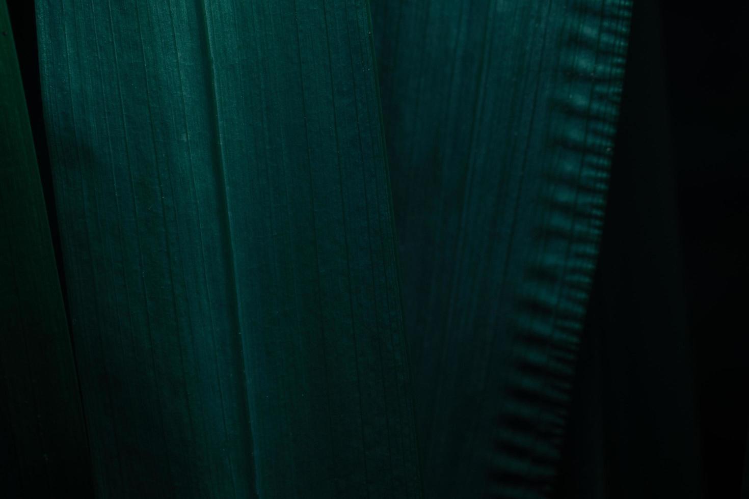 feuilles vertes tonalité de couleur de la plante fond sombre photo