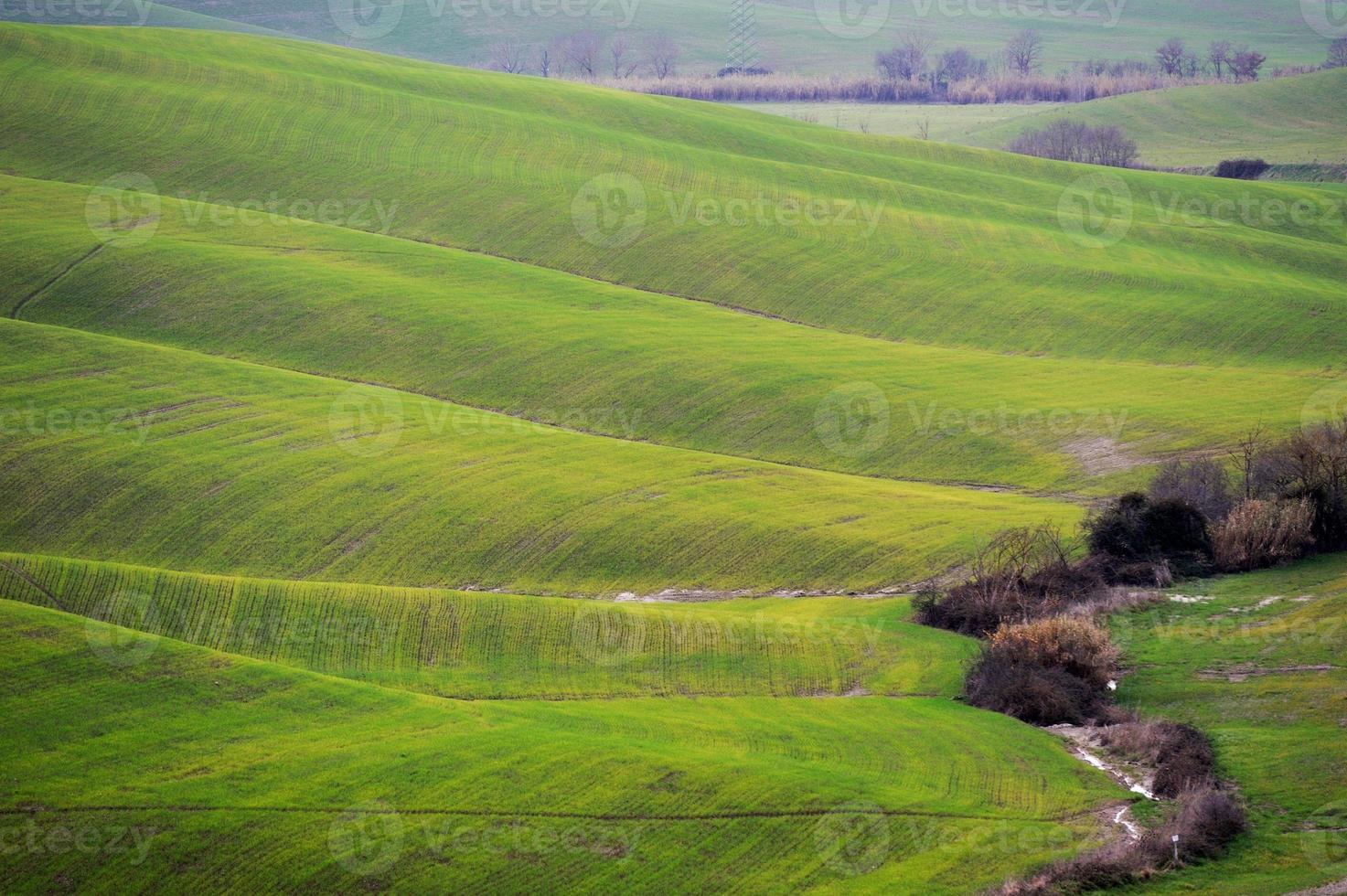 collines dorées photo