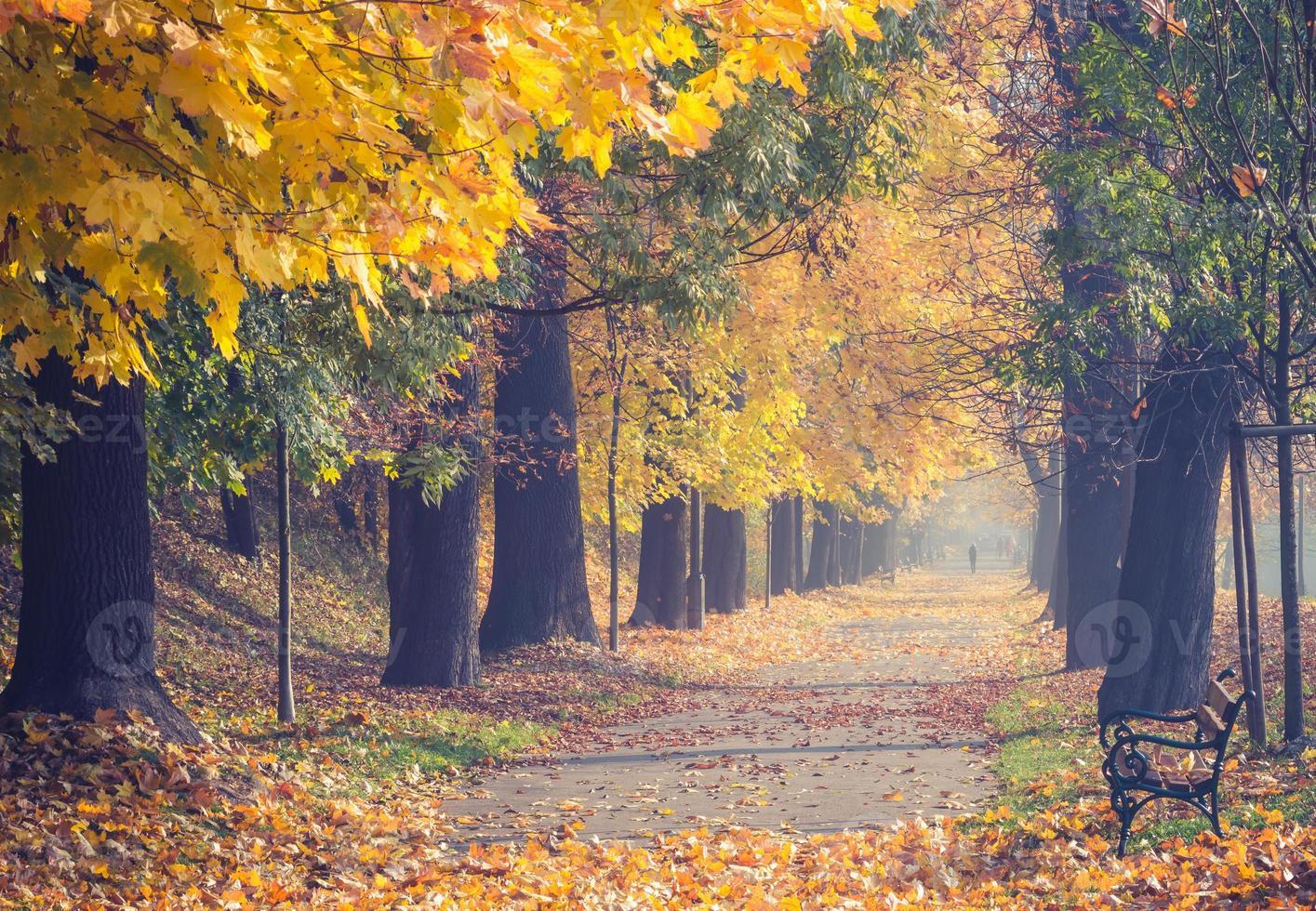 Allée d'arbres colorés dans le parc d'automne, Cracovie, Pologne photo