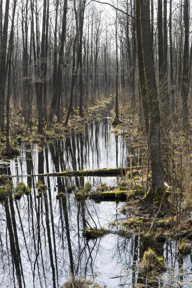 début du printemps dans le marais. photo