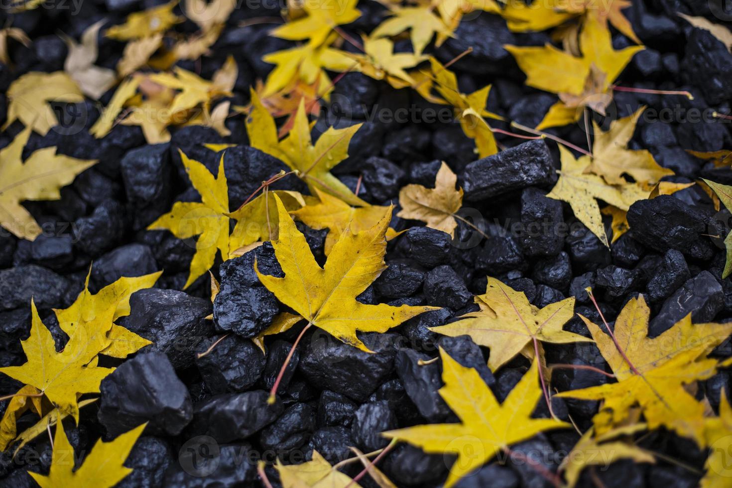 feuilles d'automne et charbon photo