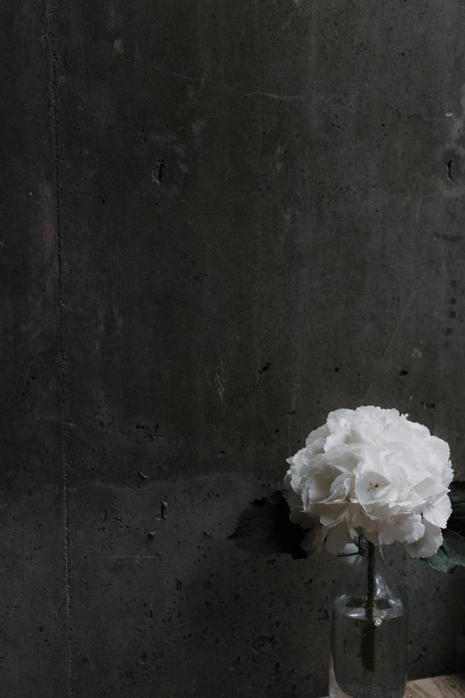 Fleurs pétales blanches à côté de mur gris photo