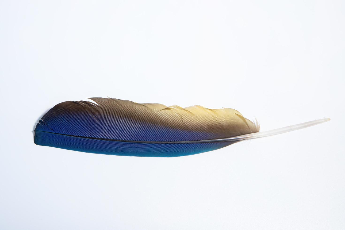 plume sur fond blanc photo