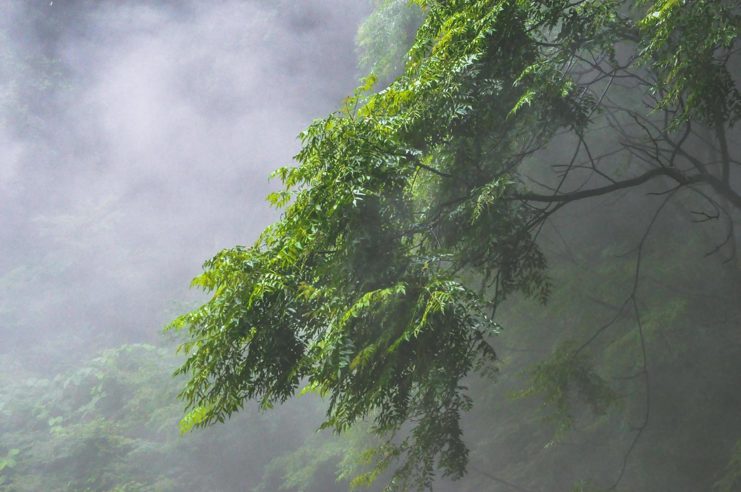 arbres à feuilles vertes couvertes de brouillard photo