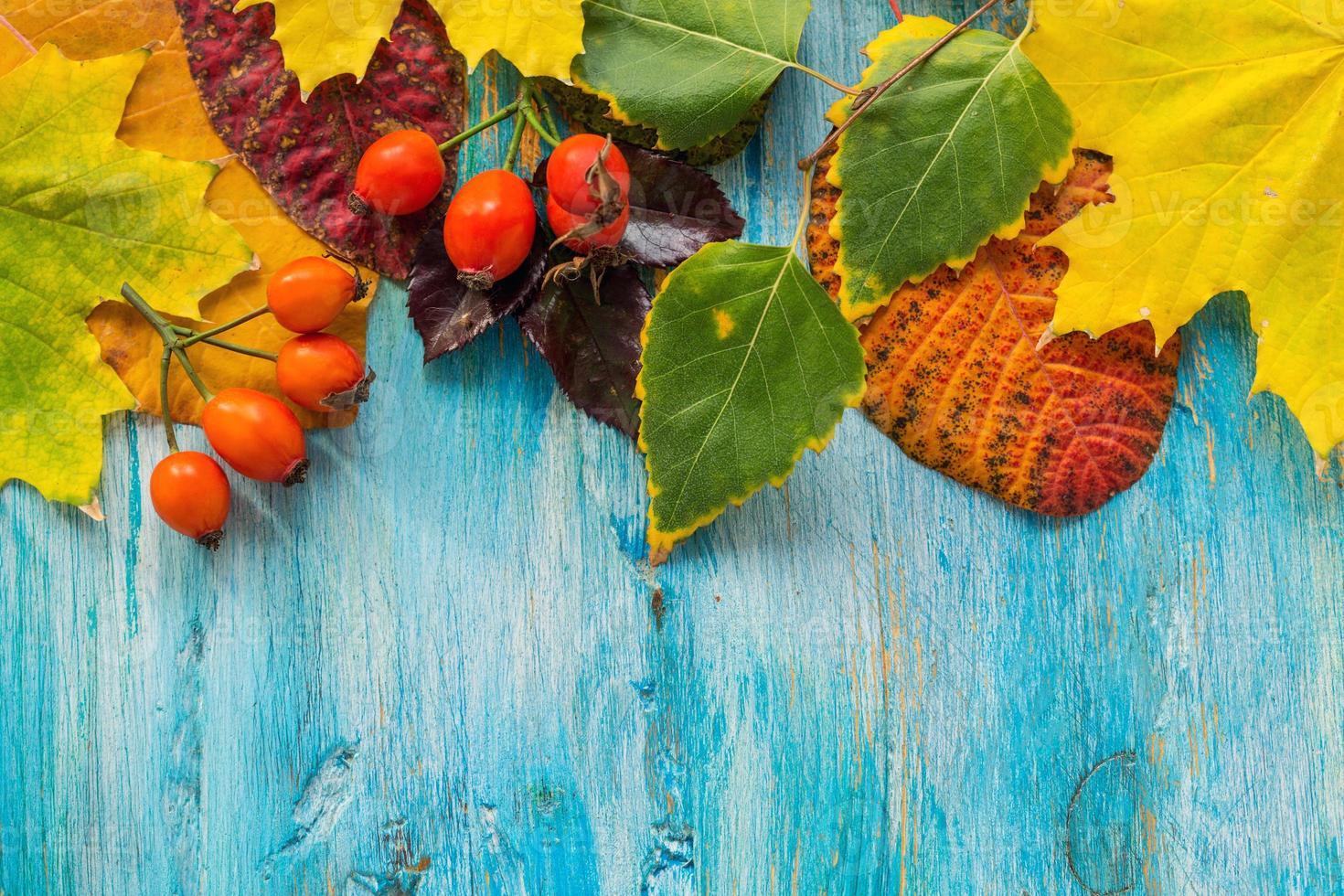 belles feuilles d'automne. photo
