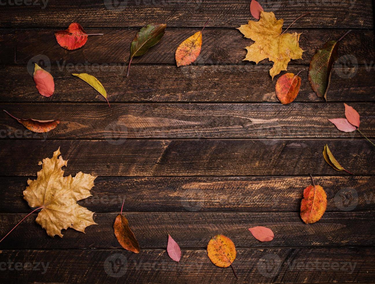 feuilles d'automne colorées sur un vieux fond de bois sombre. photo