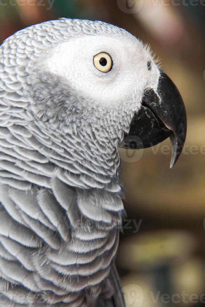 visage d'oiseau gris photo