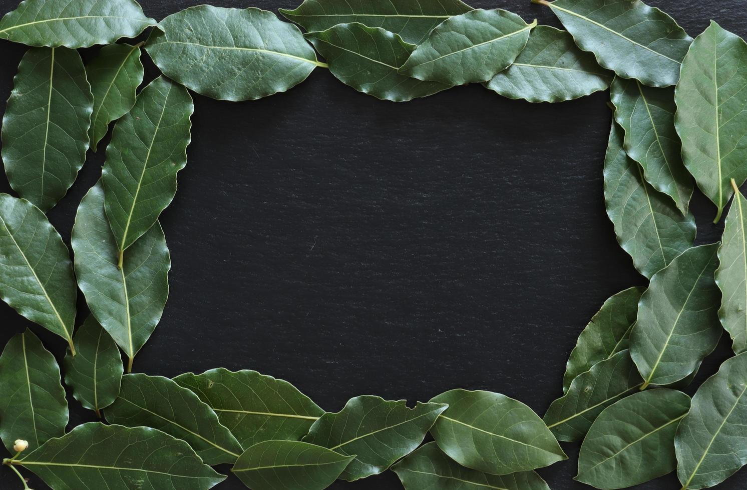 feuilles de laurier sur fond d'ardoise photo