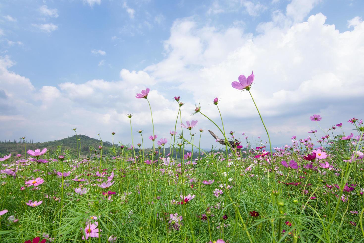 champ de fleurs en été photo