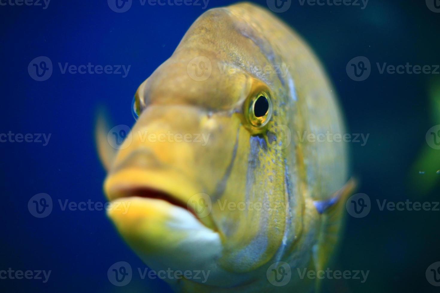 oeil de poisson photo
