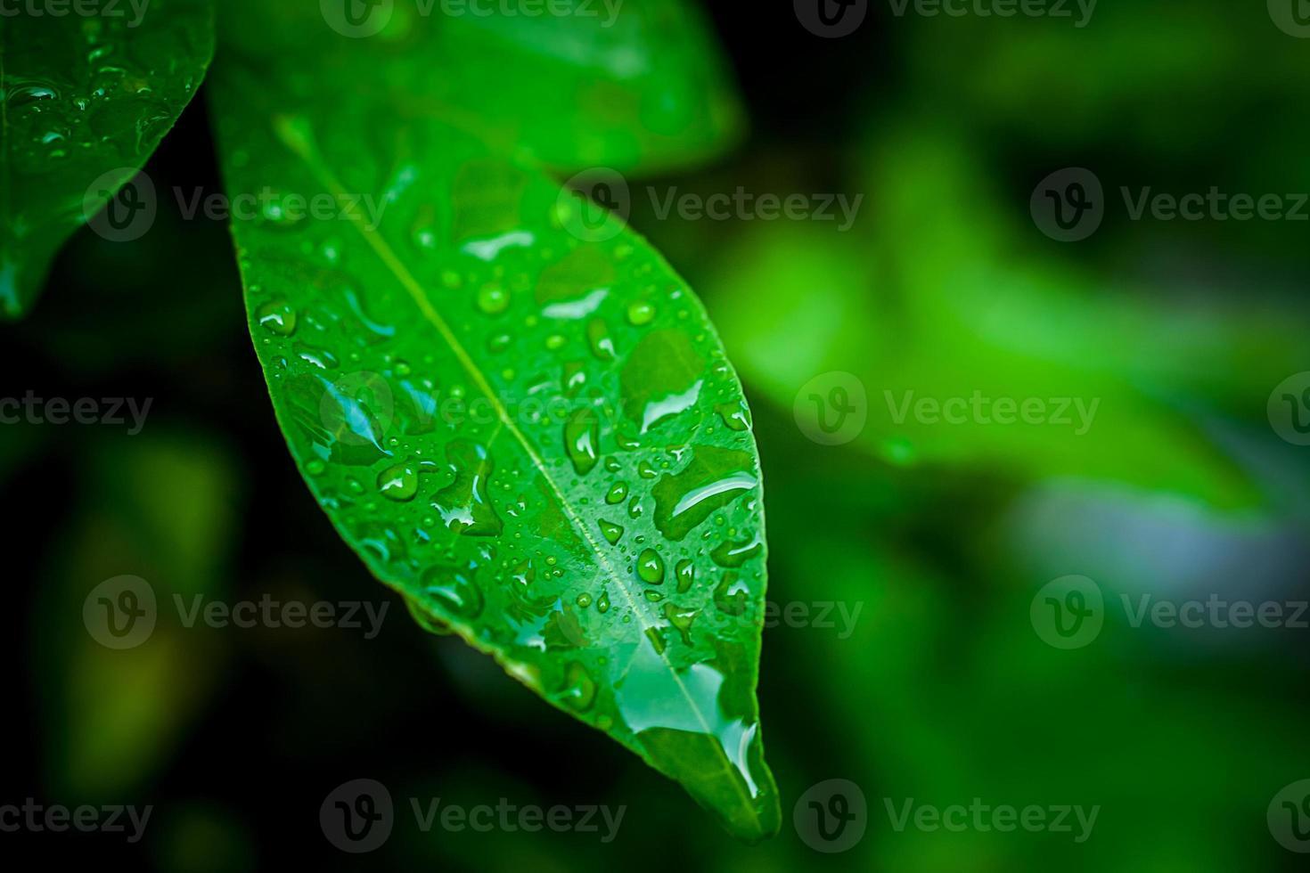 feuilles vertes avec des gouttes photo