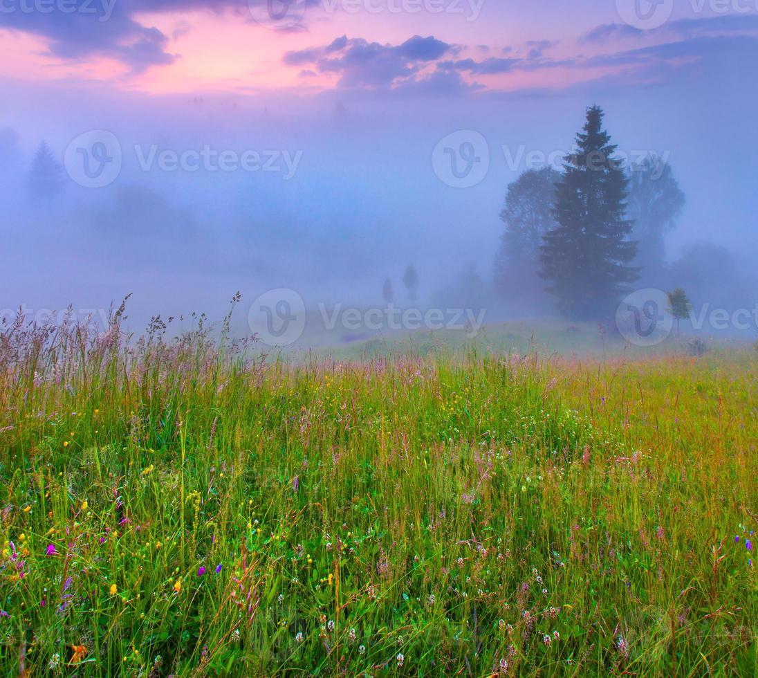 matin d'été brumeux dans les montagnes. photo