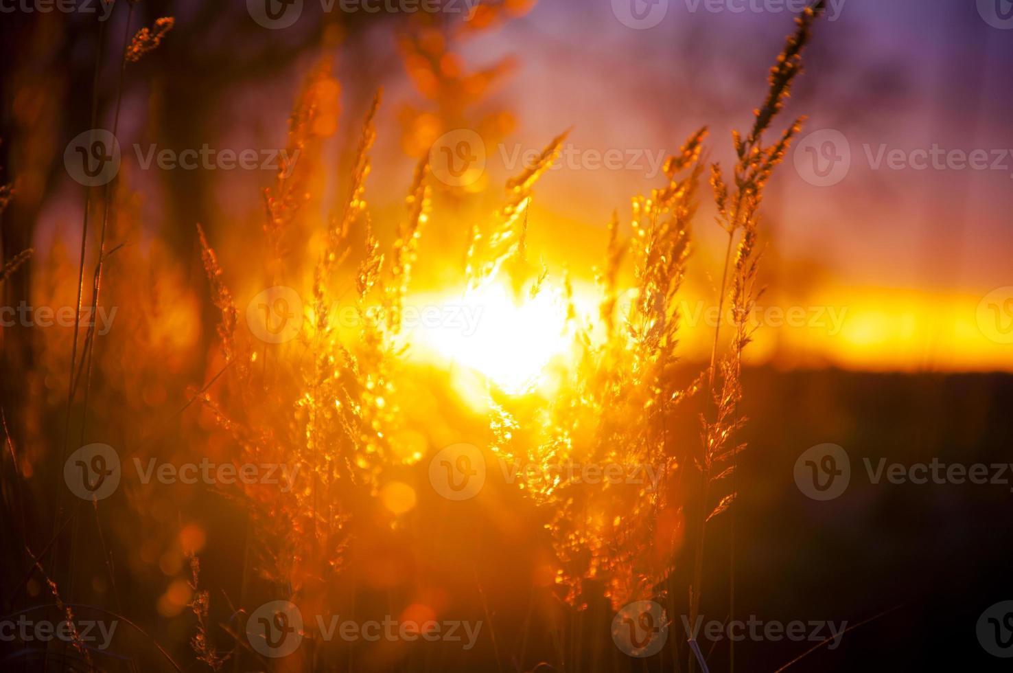 silhouette d'arbre pendant le coucher du soleil photo