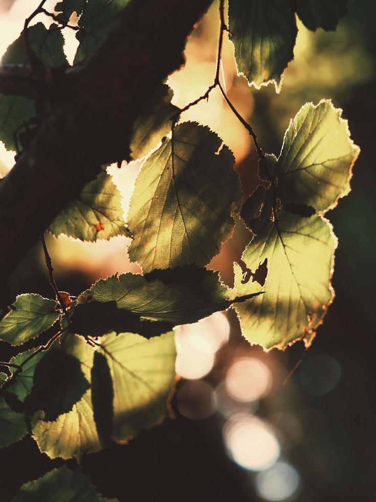 le soleil brille à travers les feuilles photo