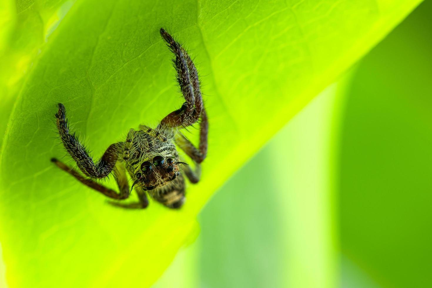 araignée sur une feuille photo