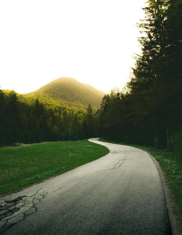 route en spirale en béton entourée de grands arbres verts photo