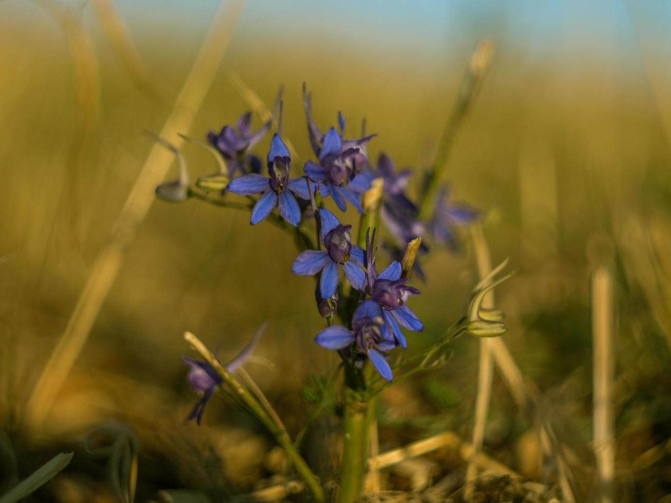 fleurs violettes dans un champ photo