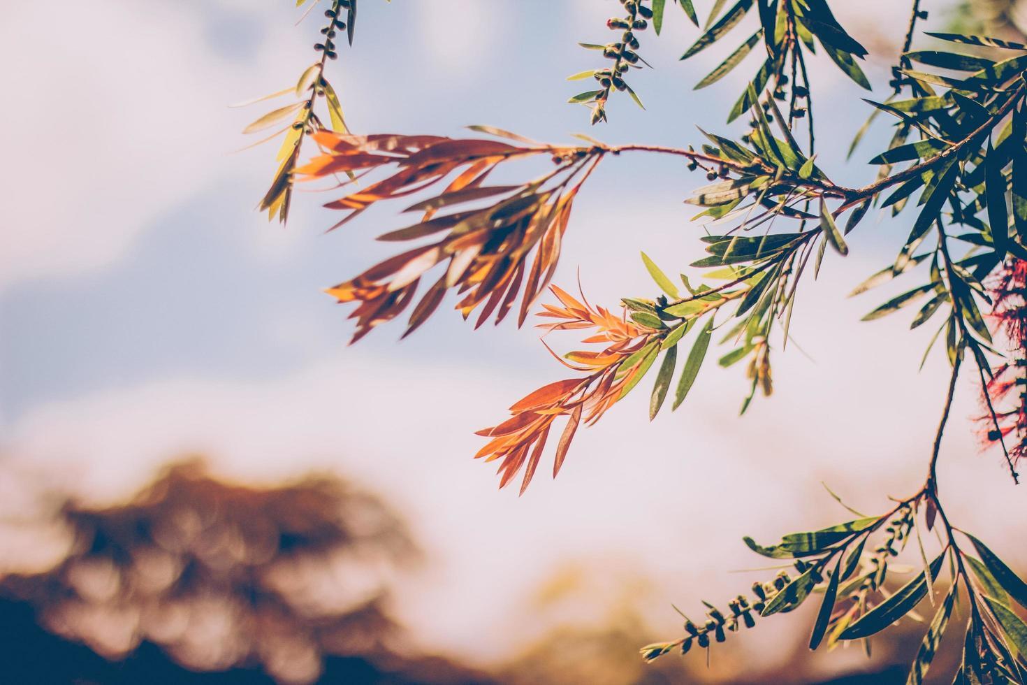 branche d'arbre orange et vert photo