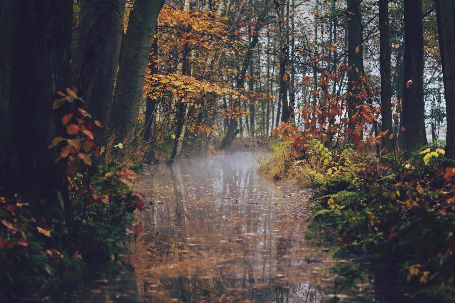 scène d'automne avec une crique photo