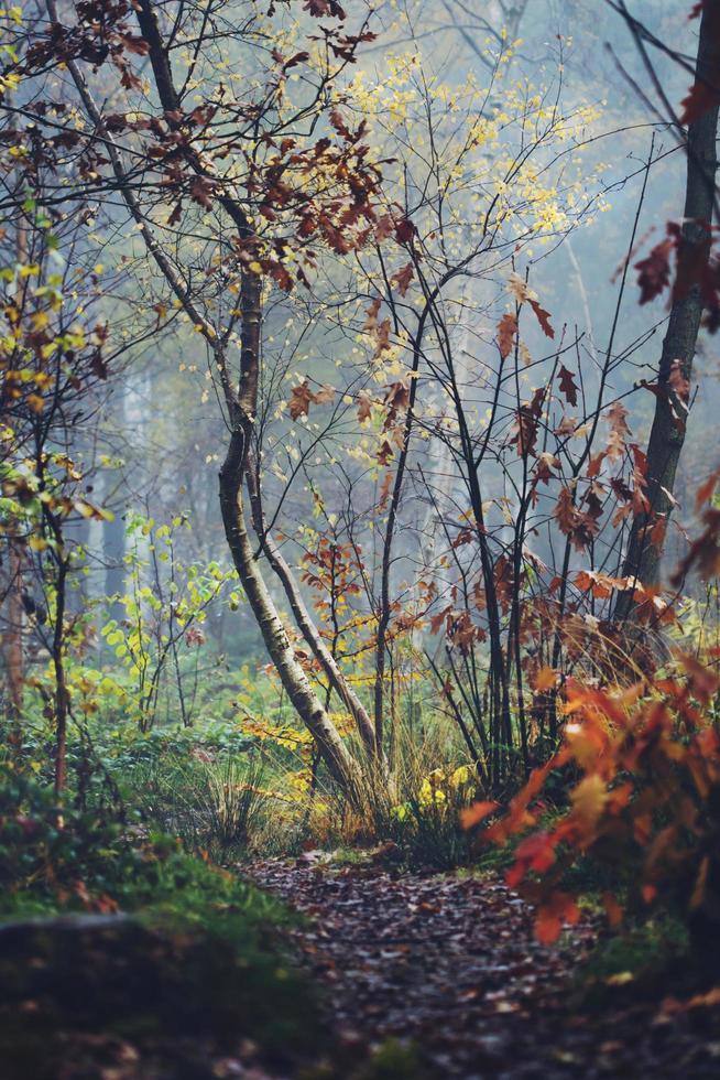 scène dautomne dans une forêt photo