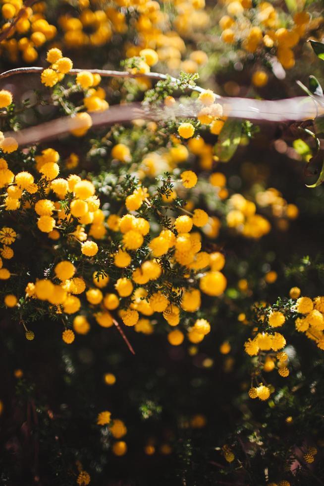 petites fleurs jaunes photo