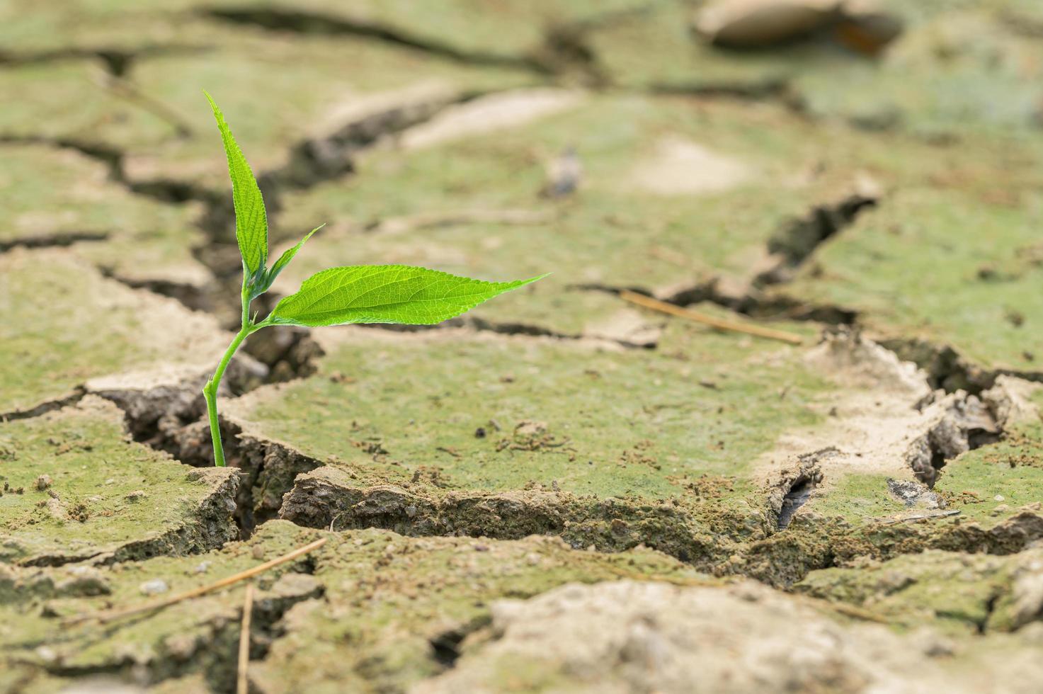 planter dans le sol sec photo