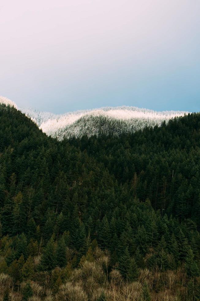 arbres verts sur la montagne sous un ciel bleu pendant la journée photo