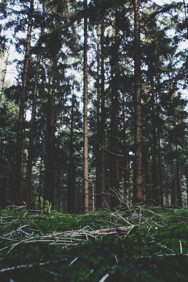 grands arbres et herbe verte photo