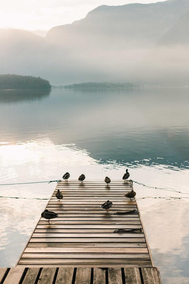 oiseaux sur un quai en bois pendant la journée photo