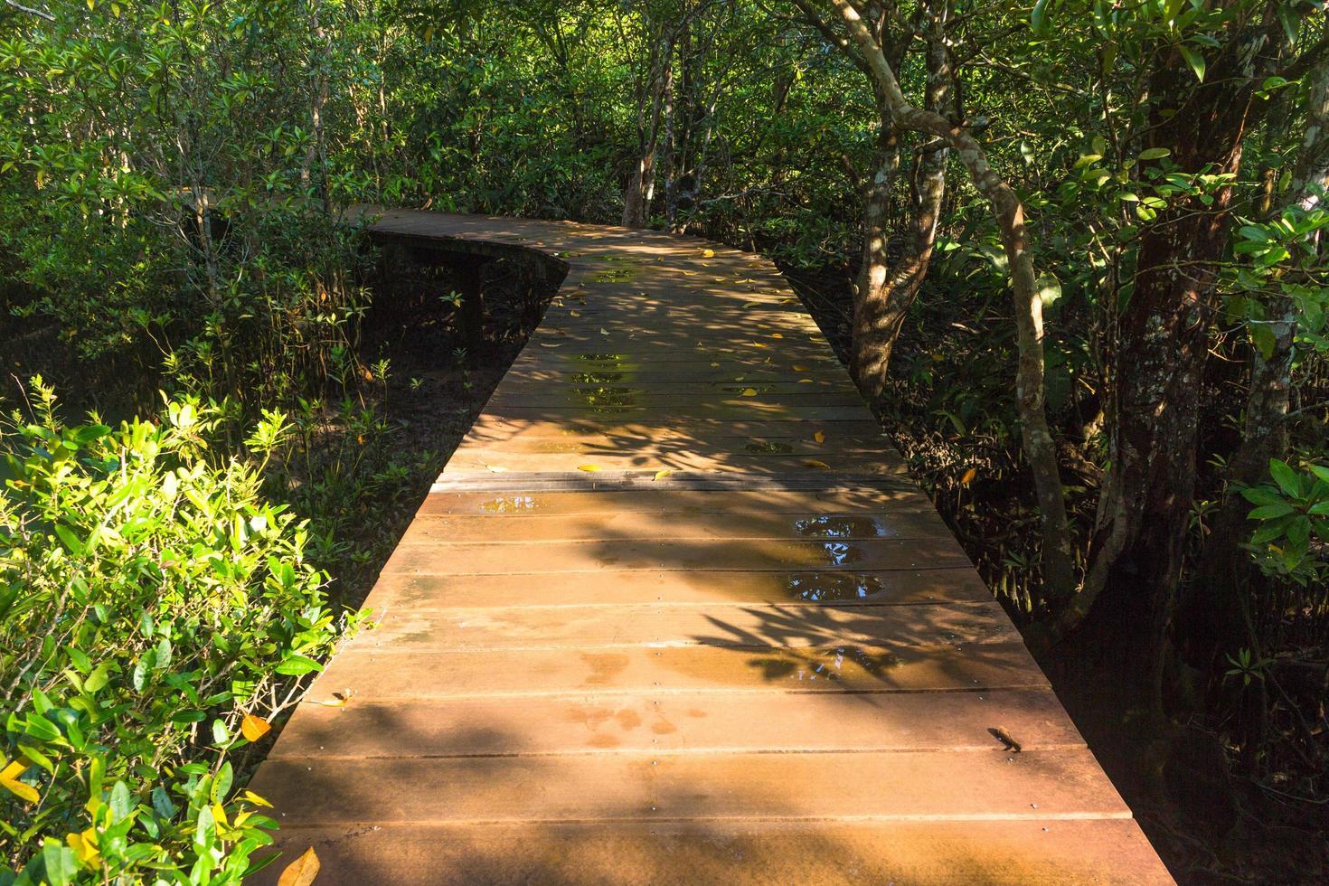 sentier en bois dans une forêt photo