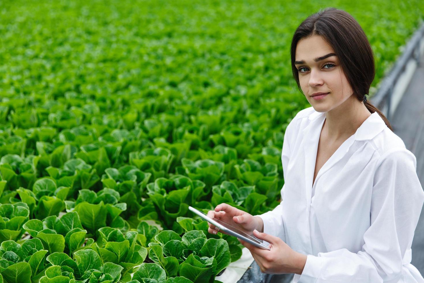 chercheur examine le chou dans la maison verte photo